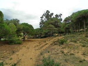 los parajes en los alrededores de Melilla son increibles, hay zonas que parecen Doñana. Arena y pinos.