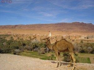 Durante el recorrido hacia el desierto descubriremos unos paisajes unicos en el Marruecos mas autentico.