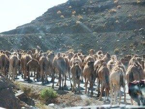 El semaforo Berebere, todo es diferente en el sur de Marruecos, te sorprenderá a cada paso.