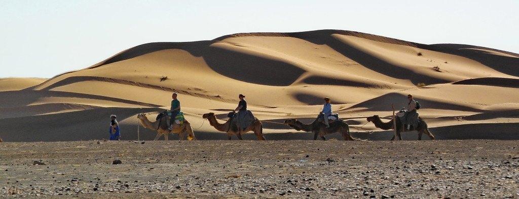 El paseo a lomos de Dromedario, es una experiencia unica, la calma del desierto al atardecer.